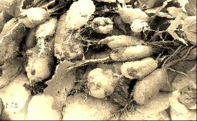 legumes-oublies.jpg